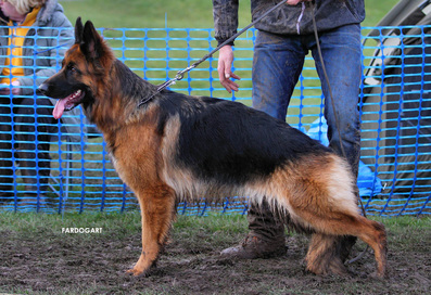 Gsd Group 15
